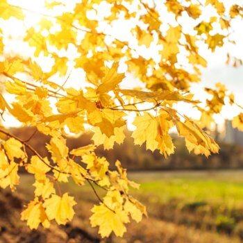 Fall Season & Leaves